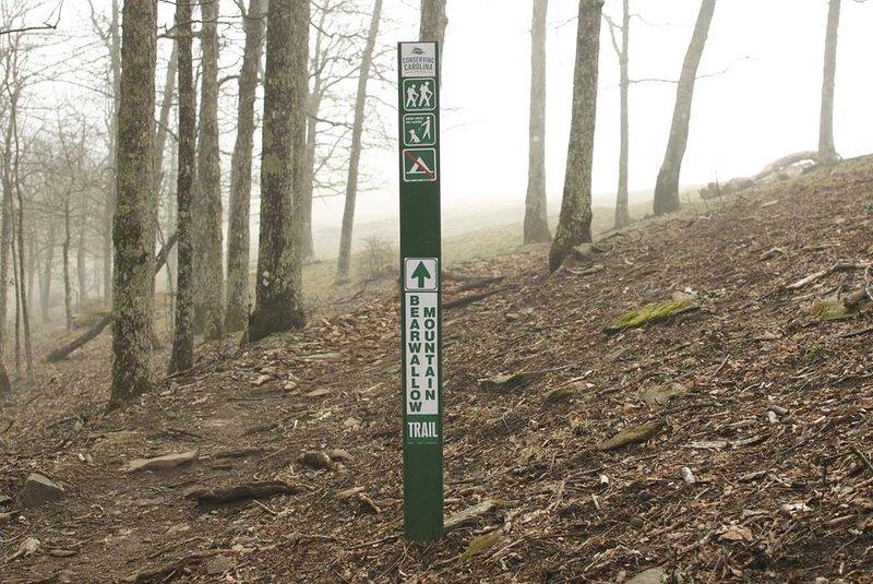 Bearwallow Mountain Trail - 25 minuten rijden