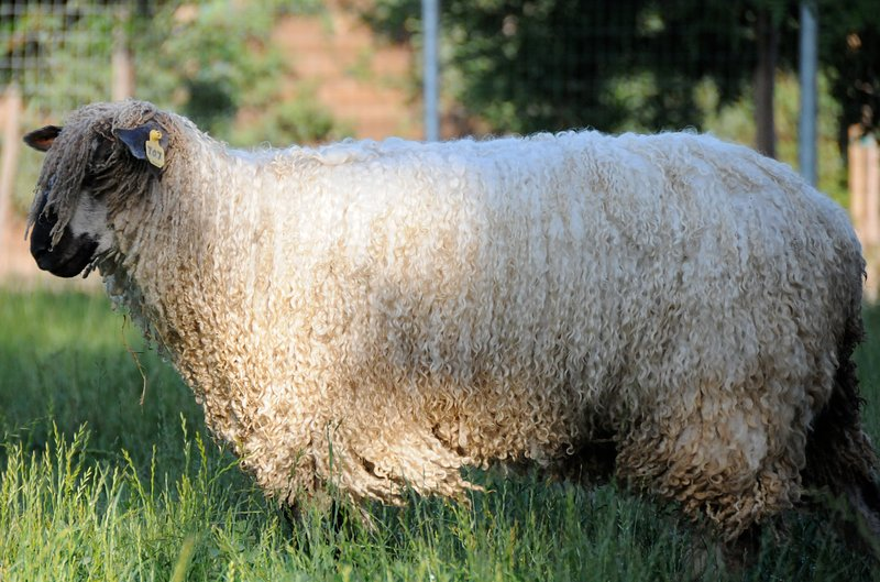 WIne Country Working Wool Sheep Farm; Namaste Farms Main Cottage, holiday rental in Palomar Mountain