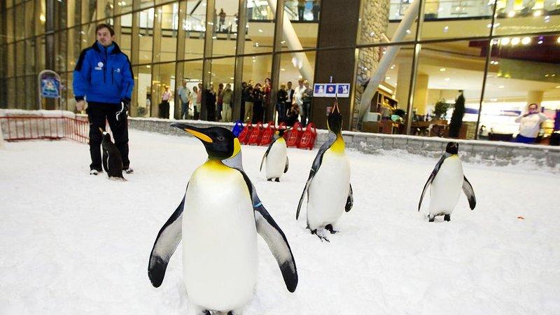 1BR, Near Ski Dubai - An Indoor Ski Resort, alquiler de vacaciones en Murqquab