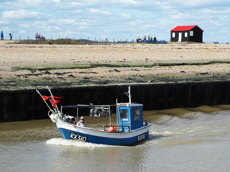 Rye Harbour and nature reserve