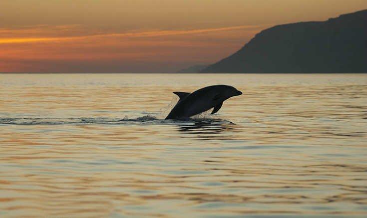 area de setubal de delfines