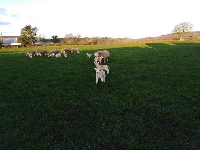 Pen and Cefn Farm