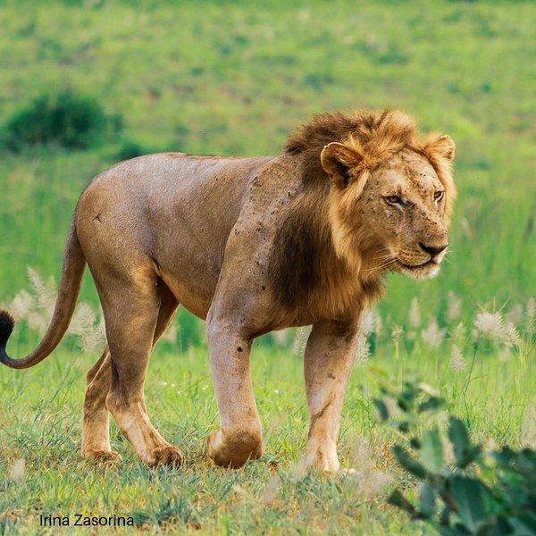 mikumi holiday safaris, holiday rental in Mafinga
