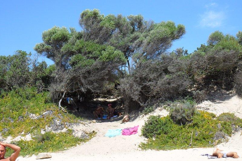 Chia, Sa Colonia beach, particular junipers.