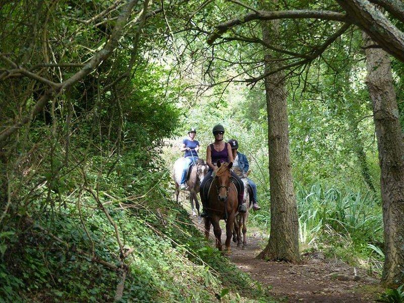 Passeggiate a cavallo nei boschi di Cape Sizun.