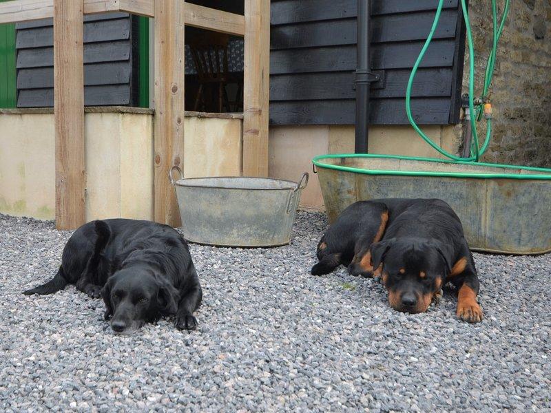 Baños para perros pequeños y grandes.