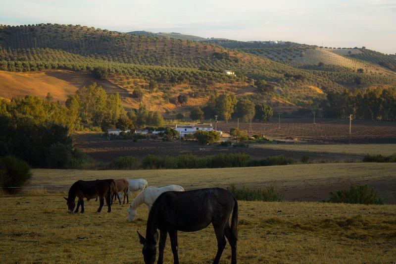 Casa Rural Asiento del Río, alquiler vacacional en Morón de la Frontera