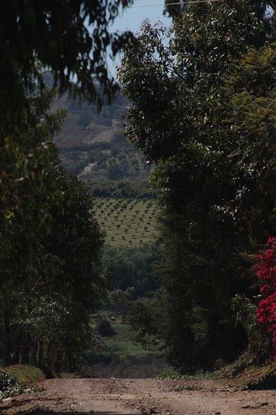 Cabaña de lujo 'La cebadilla', cerca de Mazmitla., holiday rental in Mazamitla