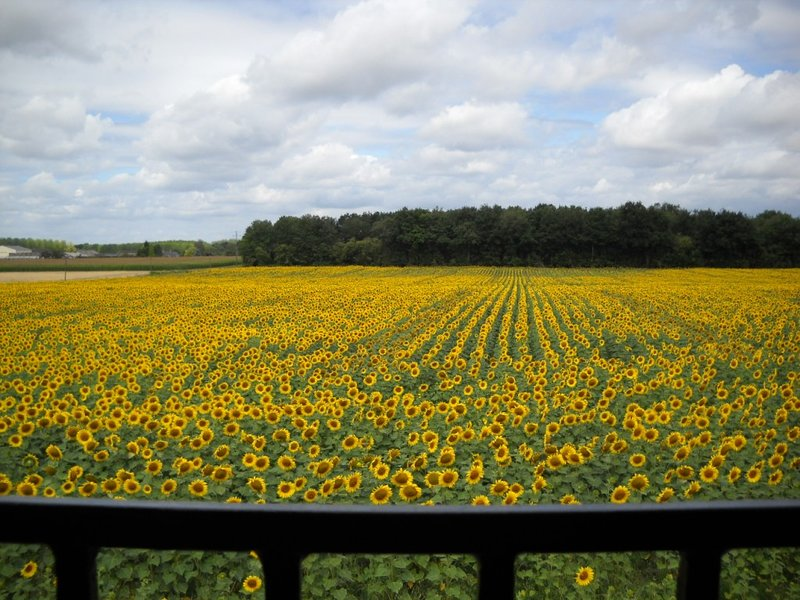 Views from the master bedroom window/door, overlooking the sunflower fields that adorn the area