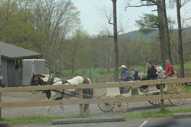 You gotta take a carriage ride in Cades Cove.