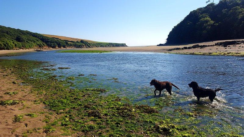 Wonwell Beach, un paisaje impresionante y perfecto para los perritos!