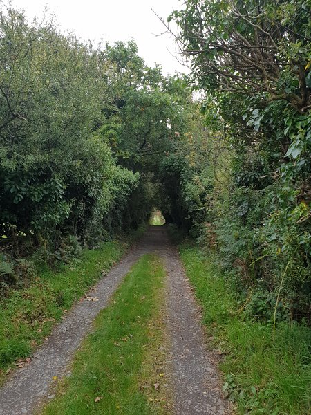 Our quiet country lane