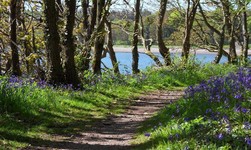 hübscher Küstenweg im Frühjahr gesäumt von Glockenblumen