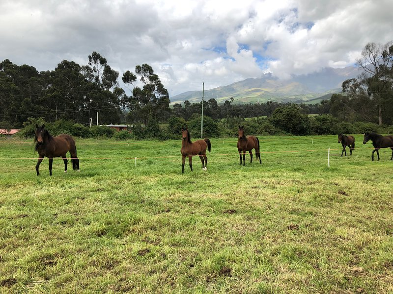 4 hectares with horses the same that can be rented