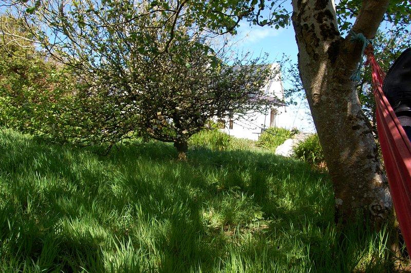 View from hammock in side garden towards house