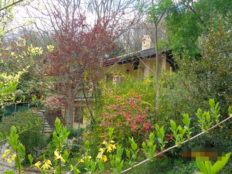Il Ritorno - Villino in collina tra querce ed ulivi, vacation rental in Province of Rieti