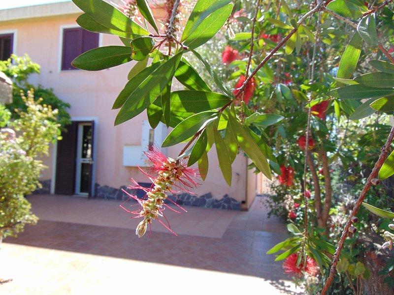 garden and entrance photo