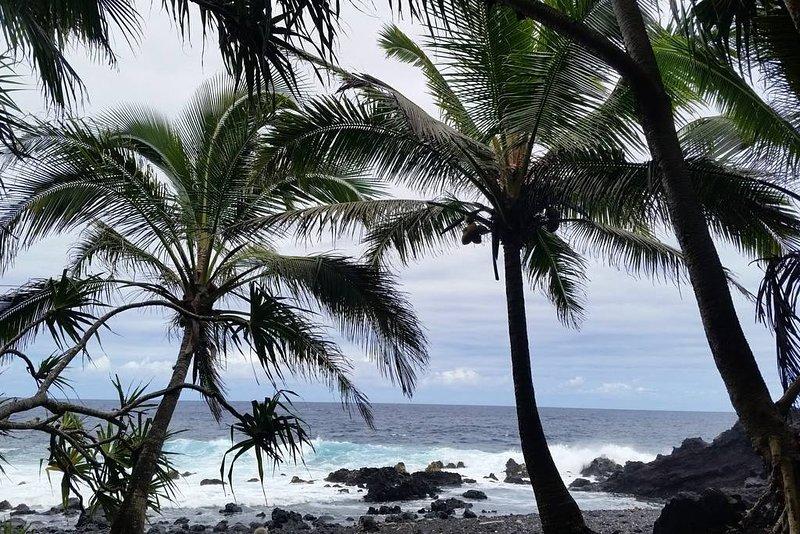 Punalu'u beach park - Ka'u. Great black sand beach to snorkel, swim, or watch the turtles.