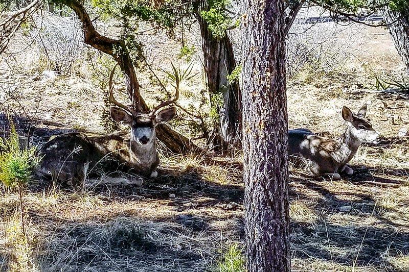In der Umgebung gibt es viele wild lebende Tiere.