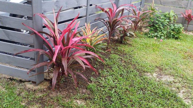 Colourful tropical garden