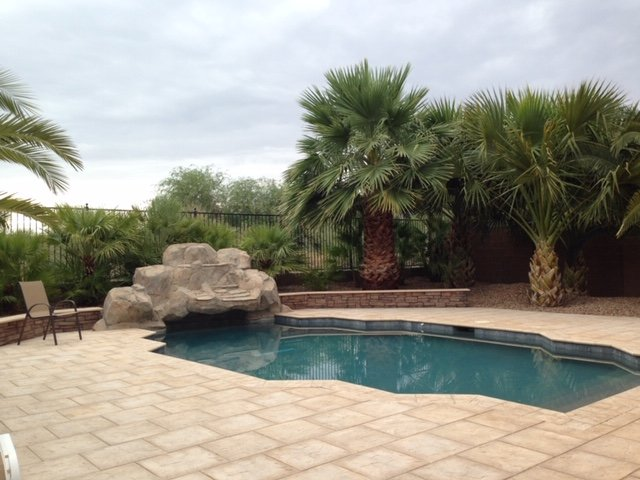 Beautiful back yard with pool surrounded by palm trees