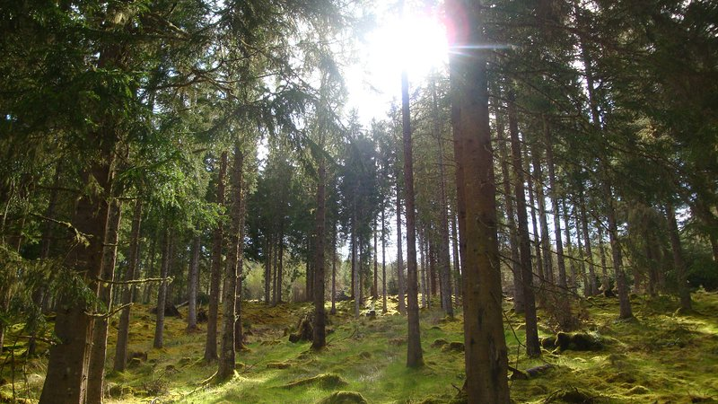 Enjoy a traffic and crowd free wander in our pristine woodlands and forests.