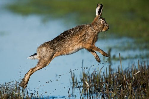 Not far from hares.