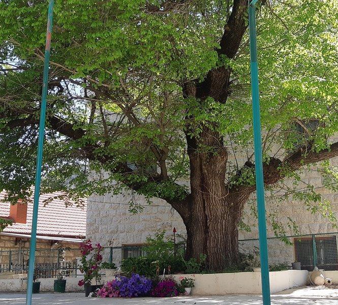 Árvore do hotel