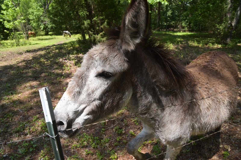 Say hello to the friendly donkey at the property!