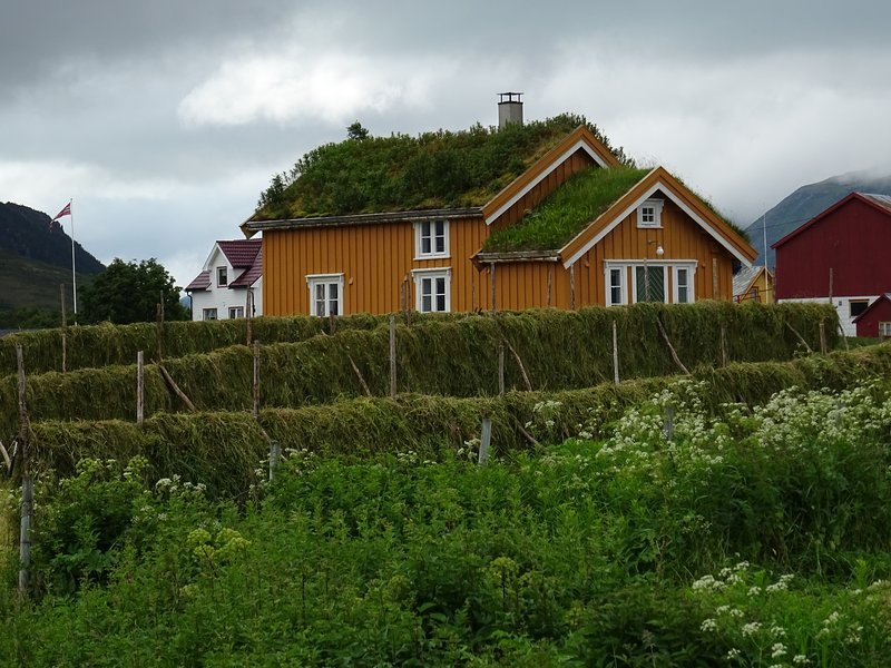 The Yellow house, Loviktunet. Summer, gras drying for the sheep in Winther. Hope for good Westberg.