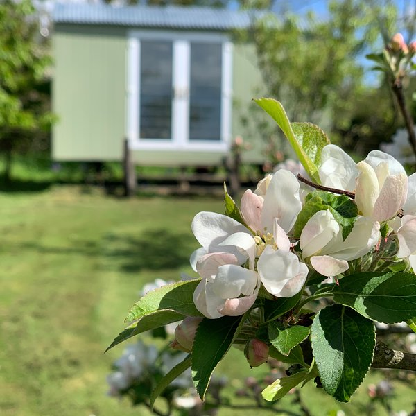 Hillcrest Hut, holiday rental in Molleston