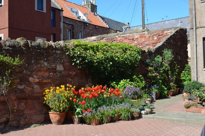 Flores de primavera en la entrada del patio comunal.