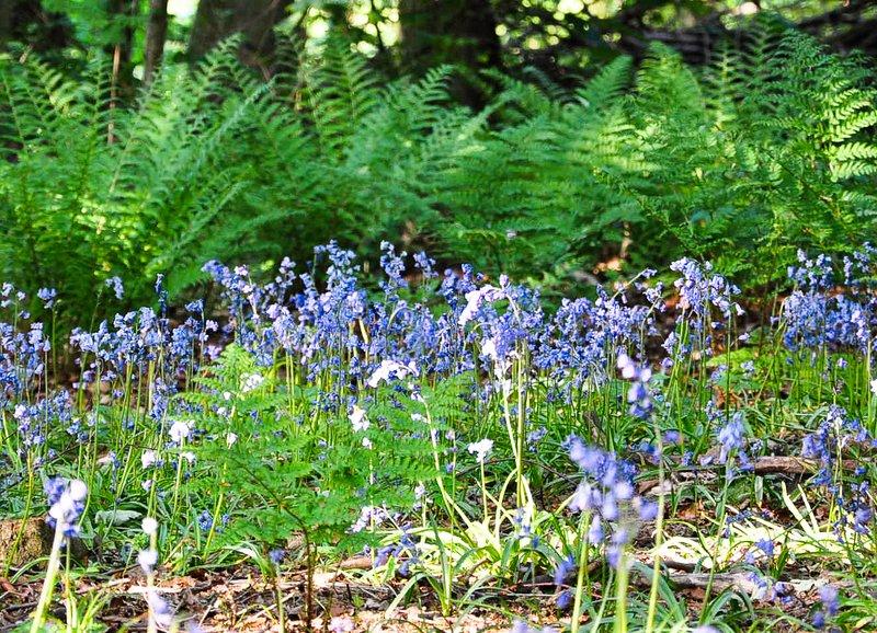 Frühling in Shropshire