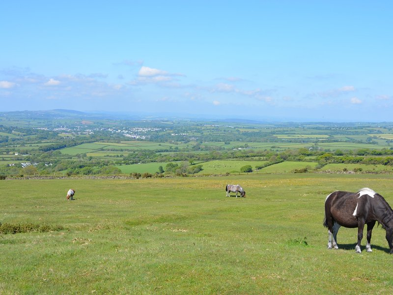 Enjoy Dartmoor