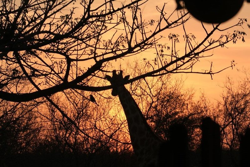 The end of another beautiful day. Bushvilla Umoja Kruger-wiildlife without fences.
