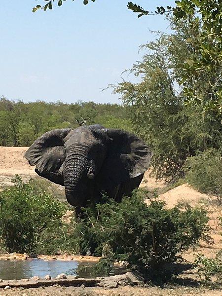 Busvilla Umoja Kruger, lo mejor de Sudáfrica desde una ubicación lujosa y asequible. ¡Reservar ahora!