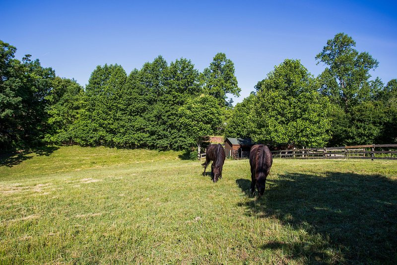 The neighboring pasture is home to 2 friendly horses!