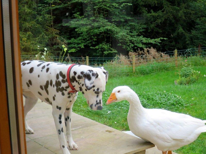 Pippin und Robert The Goose heißen gut erzogene Gäste willkommen.