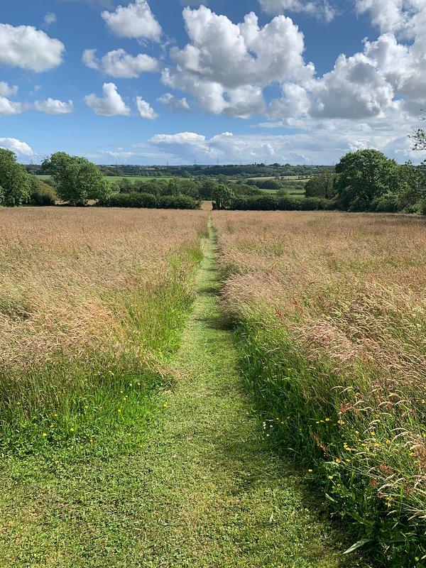 Meadow field.