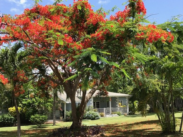 Bougainvillea Condo near to the beach – semesterbostad i Gros Islet