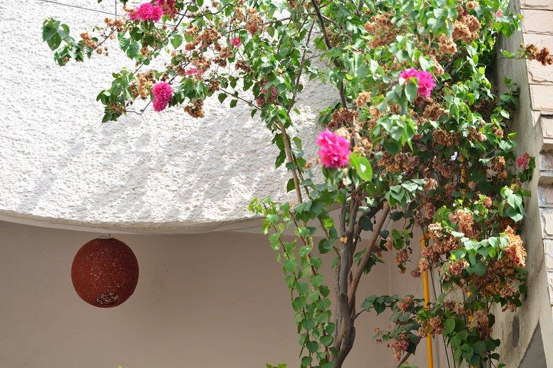 Kuteer A Peaceful Homestay, holiday rental in Manimajra