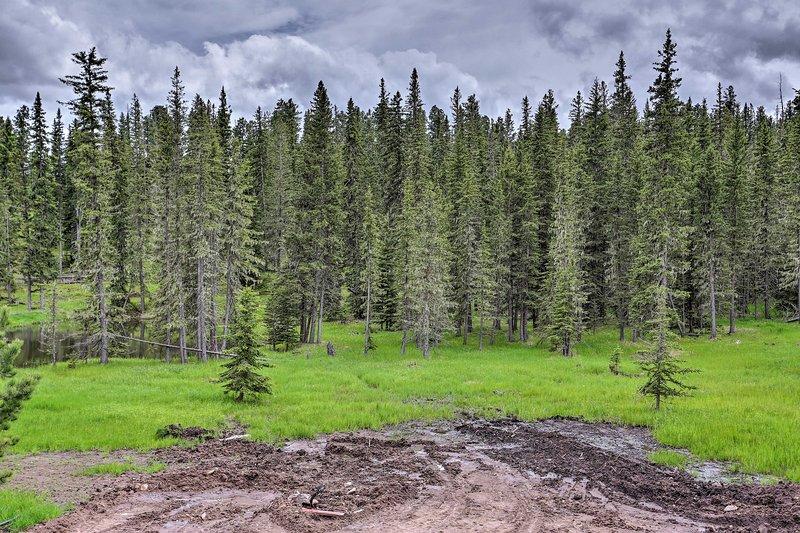Vous adorerez vous réveiller tous les jours avec cette vue sur la forêt!