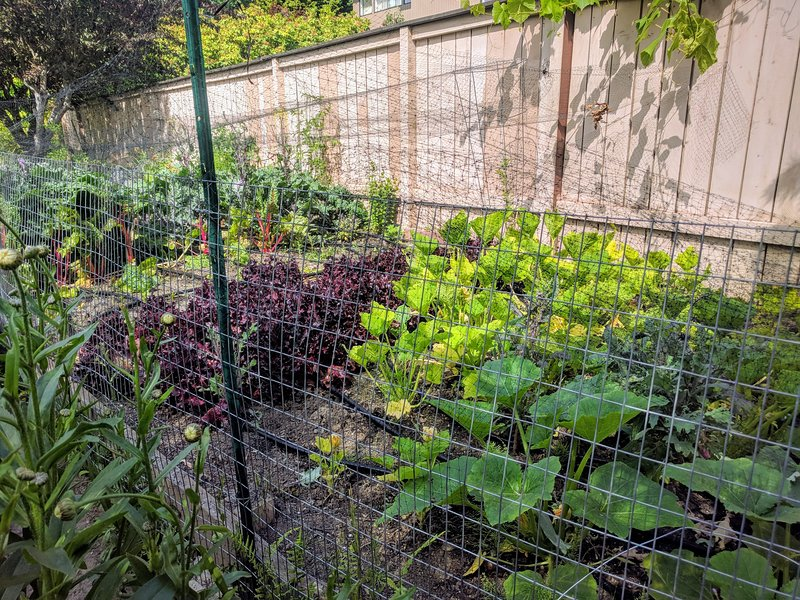 Veggie garden in July 2019. What you may harvest depends of the season
