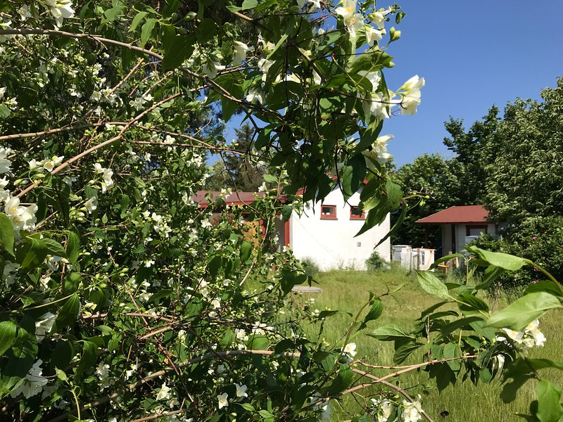 Traditional Danish Summer home - close to Heatherhill & Beach, holiday rental in Tisvildeleje