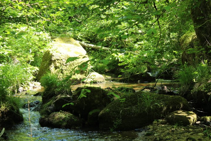 our stream, it makes a small passage on our ground. a place of meditation and zen