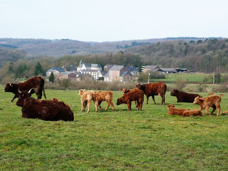 LA GRANGE DE DAVID un gîte luxueux en milieu rural, vacation rental in Hamoir