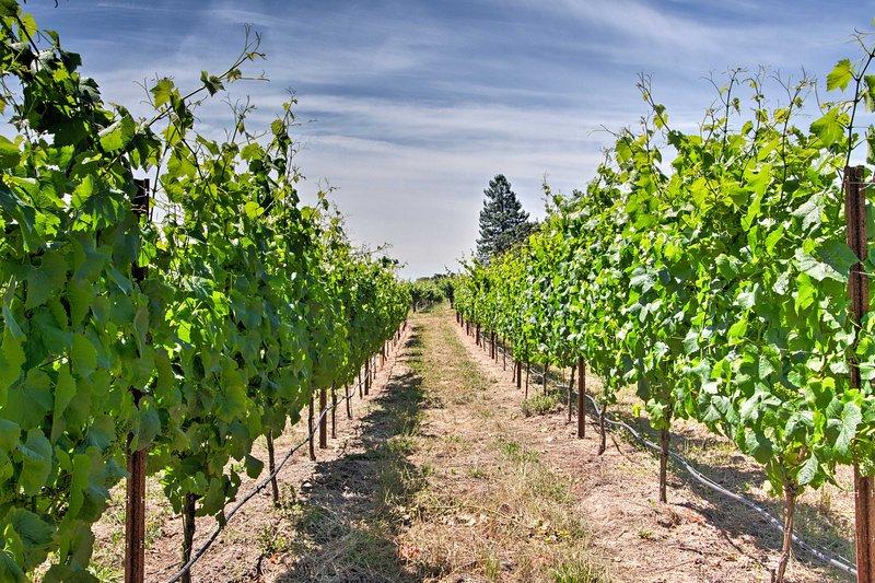 The property is nestled on an award-winning vineyard.