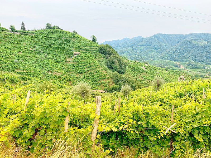 the hills of Valdobbiadene