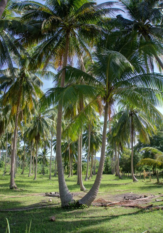 Island idyllically covered with palm trees