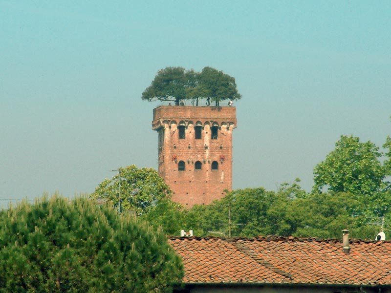 Torre Guinigi and its trees.